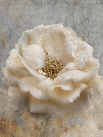 Vintage Rose 1
