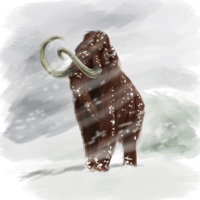 Mammuthus Primigenius Walking Through a Blizzard