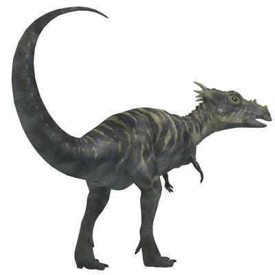 Dracorex Dinosaur from the Cretaceous Period