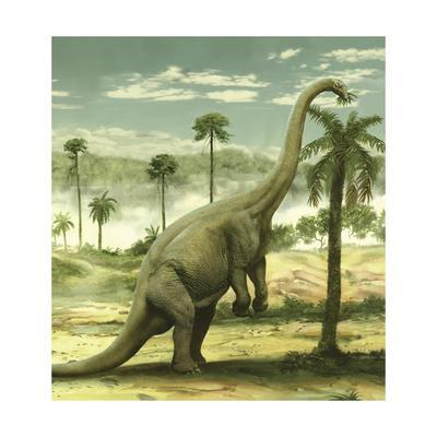 Apatosaurus Feeding on the Leaves of a Tree