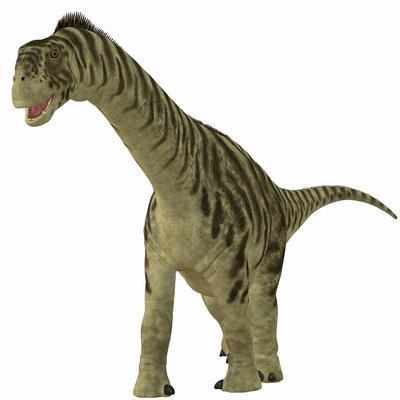 A Juvenile Camarasaurus Dinosaur
