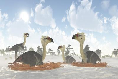 A Colony of Nesting Female Phorusrhacos During the Miocene Era