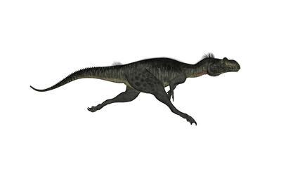 Megalosaurus Dinosaur Running, White Background