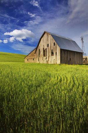 Old Barn Surrounded by Spring Wheat Field, Pr
