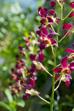 Australia, Northern Territory, Darwin. Jennys Orchid Garden