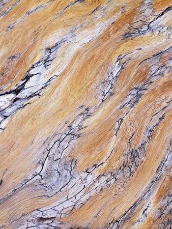 California, Sierra Nevada, Inyo Nf, Patterns of Wood Grain