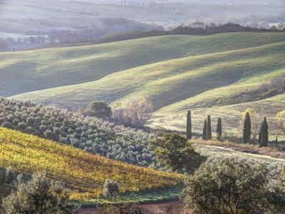 Europe, Italy, Tuscany. Tuscan Landscape in Autumn
