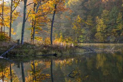 Backlit Trees on Lake Ogle in Autumn in Brown County Sp, Indiana