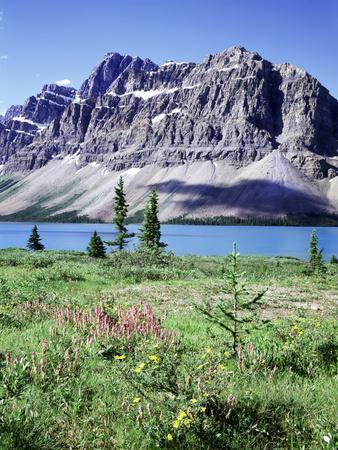 Banff National Park, Mountain Wildflowers around Bow Lake
