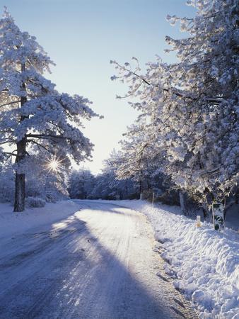 California, Cleveland Nf, Laguna Mts, Winter Morning Along a Highway