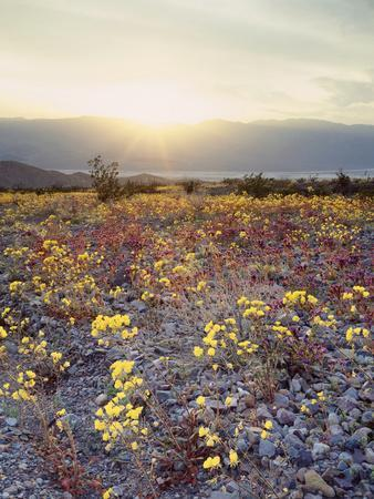California, Death Valley National Park, Sun Cups at Sunset over Death Valley