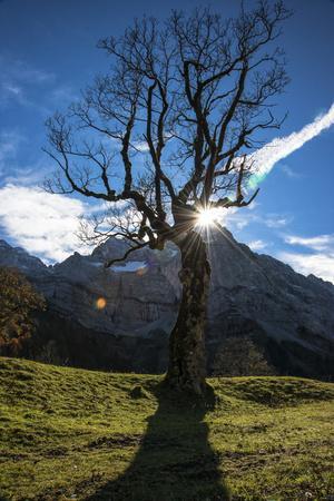 Sun Through Old, Gnarled Tree, Austria