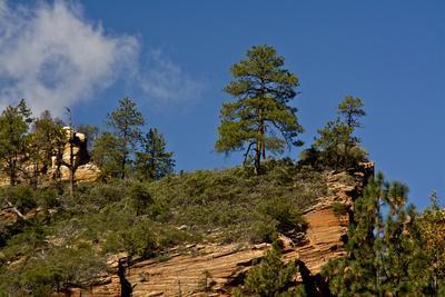Cliffs, Oak Creek Canyon, West Fork, Coconino Nf, Sedona, Arizona, USA