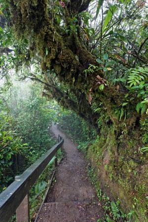 Monteverde Cloud Forest Reserve, Costa Rica