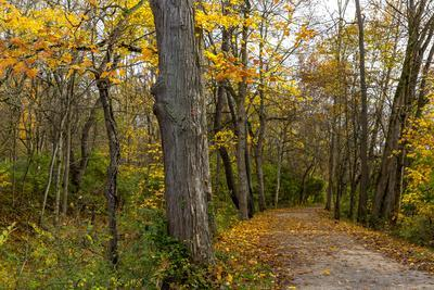 Towpath Trail in Autumn in Cuyahoga National Park, Ohio, USA