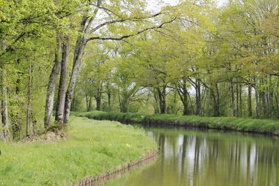 France, Loire. Spring Trees and Grasses, Canal Lateral a La Loire