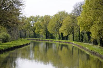 France, Loire. Trees Lining the Canal Lateral a La Loire