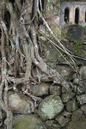 Vietnam. Roots over a Rock Wall, Hon Chen Temple, Hue, Thua Thien?Hue