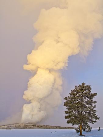 Wyoming, Yellowstone National Park, Old Faithful Geyser Erupting