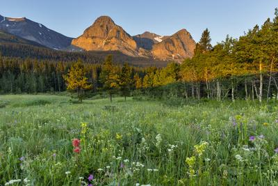 Wildflowers in the Cut Bank Valley of Glacier National Park, Montana, USA