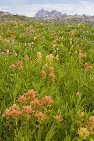 Wyoming, Grand Teton National Park, Wildflowers Along the Death Canyon Shelf
