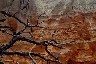 The Branches of Dead Tree Against the Colorful Cliffs in Kodachrome State Park, Utah