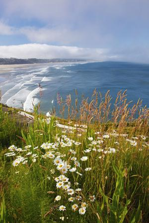 Wildflowers Along Yaquina Head; Newport Oregon United States of America