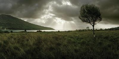 A Solitary Tree Overlooks Loch Na Dal in the Distance