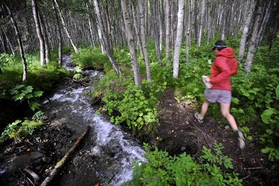 Woman Jogging Through a Birch Forest Alongside a Small Stream, Alaska