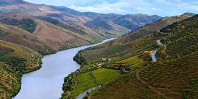 Vineyards Along Douro River, Near Coa Valley