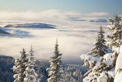 Winter Landscape with Clouds and Snow-Covered Trees; Oregon,USA
