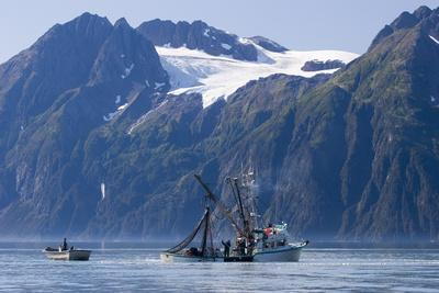 Commercial Fishing Boat *Malamute Kid* Seining for Silver Salmon Port Valdez Prince William Sound