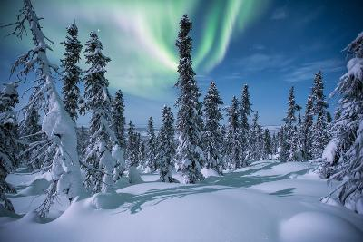 A Scenic View of a Snowy Forest with the Aurora Borealis Overhead