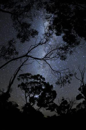 Night Sky and Tree Silhouettes, Grampians National Park, Australia