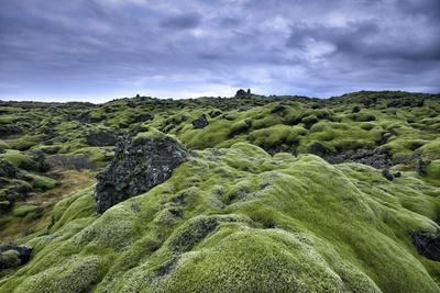 Moss-Covered Lava Field in Vik, Iceland