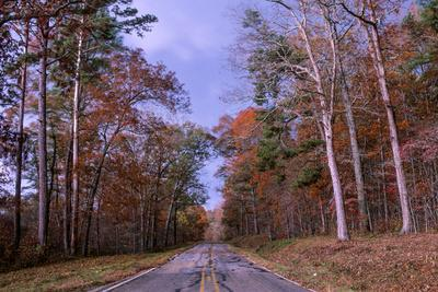 A Deserted Road Surrounded by Colorful Foliage