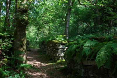 Moss and Ferns Sprout on Ruins Along a Trail Near Betws-Y-Coed, in the Snowdonia National Park