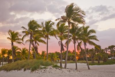 A Red Glowing Sky Backlights Palm Trees at Sunset on the Beach in Key Biscayne