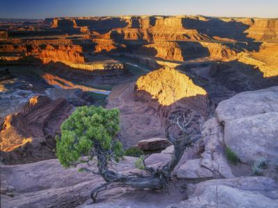 Sunrise at Dead Horse Point with Juniper, Overlooking Canyonlands National Park