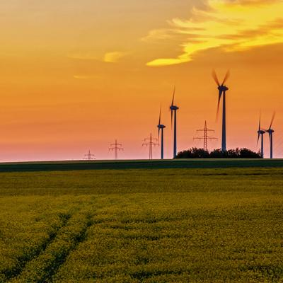 Wind Turbines Spin in a Rape Field