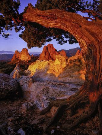 A Juniper Frames South Gateway Rock in Garden of the Gods, Colorado