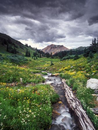 Wildflowers and Stream Near Black Bear Pass, San Juan Mountains