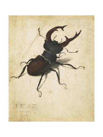 Stag Beetle by Albrecht D¼rer