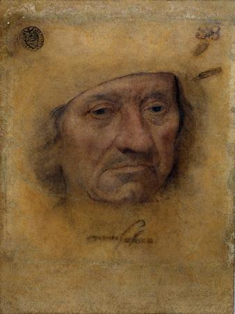Portrait of Scholar Petrus Von Clapis by Barthel Bruyn