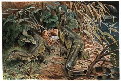 Monitor Lizard by Alfred Edmund Brehm