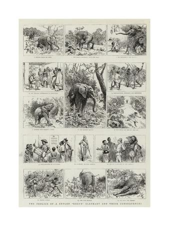 The Frolics of a Ceylon Rogue Elephant and their Consequences