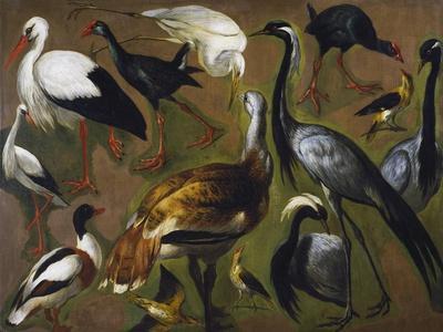 Study of Birds, by Alexandre-Francois Desportes (1661-1743), France, 18th Century