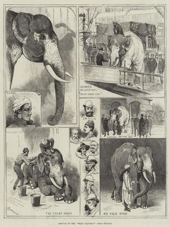 Arrival of the White Elephant from Burmah