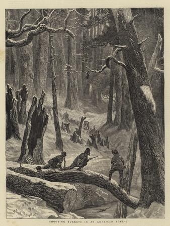 Shooting Turkeys in an American Forest