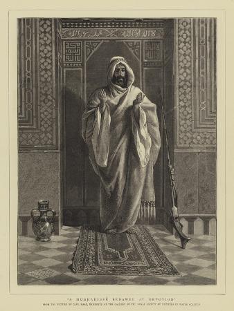 A Mugharibee Bedawee at Devotion